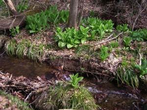 フォレストパークあだたらの渓流には、緑の葉っぱが!